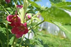 fenix-fleur-3